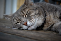 Sleepy cat (anna.josefsson) Tags: wood shadow summer sun white black cat fur nose eyes closed floor whiskers paws