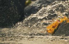 Deluge (charhedman) Tags: deepcove northvancouver water autumnleaves leaves spray rocks splash