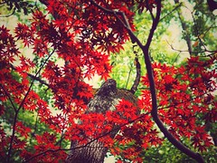 Colors of Spring (Jon-F, themachine) Tags: snapseed japan  nihon nippon   japn  japo xapn asia  asian fareast orient oriental aichi   chubu chuubu   nagoya  jonfu 2016 olympus omd em5markii em5ii em5mkii em5mk2 em5mark2  mirrorless mirrorlesscamera microfourthirds micro43 m43 mft ft      outdoors  nature  plants  tree trees   leaves  color colors