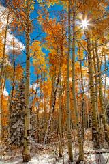""" Carving of Yesterday's Memories ""  - Kelber Pass -4669 (Photographer / Artist) Tags: snow fall 2016 colors kelberpass colorado rockymountain evergreen trees aspens sunstar"