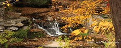 IMG_9261 (Sally Knox Sakshaug) Tags: letchworth state park new york fall autumn october colors leaf leaves orange yellow stone grey gray brown green red beautiful pretty scenic waterfall water white spectacular falls beauty genesee river portagecanyon wolf creek area small delicate simple quiet