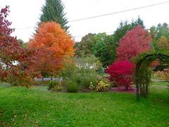 Electric color! (lovesdahlias 1) Tags: trees shrubs foliage fall nature newengland