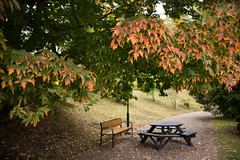 Under the autumn leaves (Infomastern) Tags: botanicgarden botaniskatrdgrden lund autumn bench bnk hst leaf lv exif:model=canoneos760d geocountry camera:make=canon geocity camera:model=canoneos760d exif:aperture=35 exif:focallength=18mm exif:isospeed=200 exif:lens=efs18200mmf3556is geostate geolocation exif:make=canon