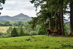 Powerscourt Gardens (benito.anon) Tags: powerscourt gardens big sugar loaf ireland irlanda irish green wicklow horses caballos montaa mountain