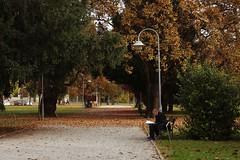 IMG_2510 (azaksek) Tags: city park bench read street autumn fall trees nature canon