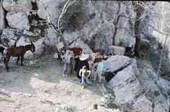 """Olevano sul Tusciano (SA), 1972, Il """"Carnevale dei Poveri"""": la sfilata dei dodici mesi. (Fiore S. Barbato) Tags: italy campania salerno monti picentini fiume tusciano olevano olevanosultusciano carnevale poveri sfilata dodici mesi asini muli recita farsa montipicentini asino rappresentazione carnevalesca maschera maschere"""