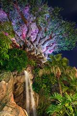 The Tree of Life (MattStemerman) Tags: d750 disneyworld waltdisneyworld disney animalkingdom dak wdw treeoflife nikon