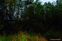 DSC_1618 (andrzej56urbanski) Tags: chernobyl czaes ukraine pripyat prypeć