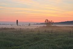 IMG_6353 (maro310) Tags: hungary outdoor field sunrise landscape nature termeszet sky colours balaton szantod szantodpuszta morning mist mezo 365project countryside clouds rural europe summer tree 250v10f 500v20f
