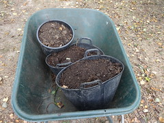 Today I Was Mostly Spreading Compost (ART NAHPRO) Tags: compost barrow sussex october 2016