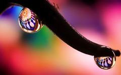 two drops (Yasmine Hens) Tags: two drops colors hensyasmine namur belgium wallonie europa aaa  belgique blgica    belgio  belgia   bel be
