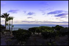 White Point Beach Park (KSDiaz) Tags: beach california sanpedro ocean landscape nature palm tree parkreserve