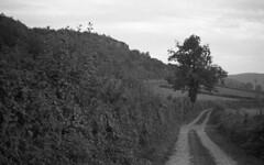 Long way home (Blitzwuerfel (flash cube)) Tags: burgundy werracamera tessar2850 rodinal efke50
