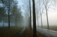 Autumn Mist (buteijn) Tags: lines landscape mist misty autumn culemborg holland