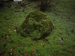 Green boulder (Bushman.K) Tags: boulder moss plant