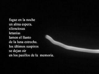 #poesía #poema #poetry #palabras #noche