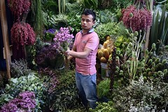 Flowerlandia (-jamesstave-) Tags: mexico mexicocity cdmx df distritofederal ciudaddemxico mercadodejamaica market mercado flowers flores guy chico joven iztapalapa nikon d5300
