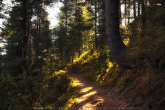 MiranJani Track (AQAS.Clicks) Tags: landscape pakistan nature tracking nathiagali murree miranjani mushkpuri forest dusk sunlight