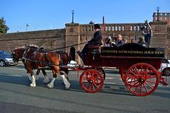 heading towards Brunswick station (napoleon666uk) Tags: liverpool international horse festival liverpoolinternationalhorsefestival horseshow echoarena animal parade