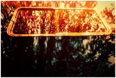 Everybody Hurts (sjpowermac) Tags: d9009 55009 class55 deltic diesel locomotive alycidon york yorknrm reflection tree autumn memory inmemoriam leaves window
