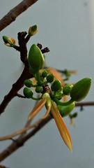 Spring is coming #Thang12 #SaiGon (Thongnn) Tags: thang12 saigon