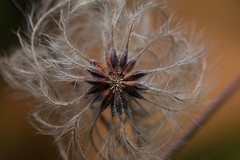 Swirly Plant (benevolentkira7) Tags: plant nature leaf outdoors outdoor outside fall season dark color contrast macro close