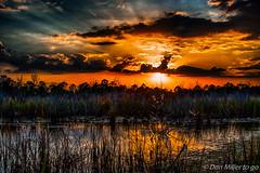 Florida Gold (DonMiller_ToGo) Tags: cloudporn sunsetmadness sunsets nature goldenhour lake florida 7xp millerville onawalk clouds outdoors sunsetsniper hdr d810 hdrphotography sky