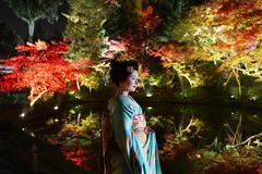 Maiko20161119_06_01 (kyoto flower) Tags: kodaiji temple fukuno kyoto maiko 20161119      noblesseoblige