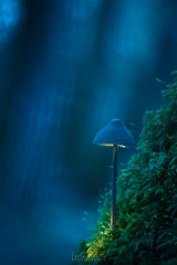 Un point de lecture (Fontaine Loic - photographie) Tags: macro mushroom fungi pilz champignon forest light lightpainting nature botanic colorful view trees wall wide wood wild traditional panoramic sky texture rain image misty color fall leaves scene canon tamron 6d glowing glowingmushroom