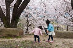 Having fun anywhere (Wunkai) Tags: sakuragawashi ibarakiken japan  ziyiwang jeanwang    amabikisanrakuhoji  sakura