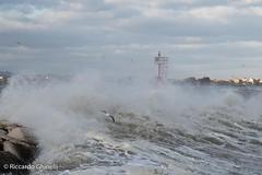 Mareggiata (Riccardo Ghinelli) Tags: rimini acqua mare porto water sea wave storm port spray gabbiano seagull tempesta bora vento wind pier spruzzi