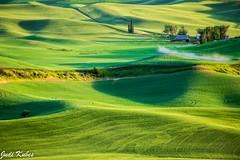 _MG_0482 (judikubes) Tags: palouse washington farm rollinghills dirtroad green fields trees barn shadows