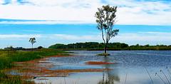 Laguna-01 (jagar41_ Juan Antonio) Tags: laguna argentina arroyo río buenosaires navarro arboles arbol provinciadebuenosaires