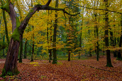 Forest in colors (Artur Tomaz Photography) Tags: fall fontelo green leafs yellow autumn colors depth forest orange tree viseu