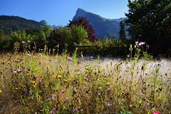 Avant que la rose ne s'vapore (Excalibur67) Tags: nikon d750 sigma 24105f4dgoshsma globalvision paysage landscape mountain montagne arbres trees alpes flowers fleurs