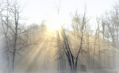 The best dreams happen, when you're awake (Captions by Nica... (Fieger Photography)) Tags: fog sunbeams sunrise foggy sun outdoor quebec canada trees tree nature landscape mist misty rays fall autumn