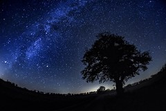 Night sky (tombrissiaud) Tags: nature photo photography paysage sovietlens oldlens fullframe ff nightphotography milkyway toile stars nightsky poselongue longexposure night nuit ciel sky f28 16mm zenitar d700 nikon