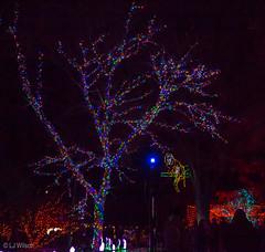 20161201 Brew Lights at the Zoo-3682 (Lora J Photography) Tags: zoolights fonz brewlights nationalzoo