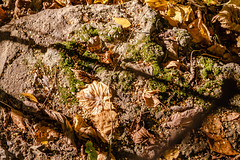 MyagkovS-188.jpg (stasmyagkov) Tags:      day autumn yellow nature park troparevo russia moscow texture moss foliage stone concrete shadow