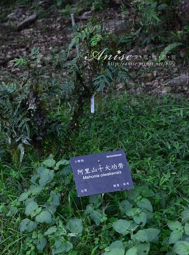 福山植物園_035.jpg