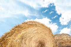 Haystack outdoors, sky with clouds in background. (Konstantin Yolshin) Tags: ranch blue summer sky cloud white industry nature beautiful beauty grass weather circle landscape day view natural bright outdoor farm background wheat scenic straw dry nobody stack growth pasture crop round haystack environment organic dried hay agriculture bundle shape product bale idyllic tranquil cloudscape foreground rolled harvesting cultivated hayrick