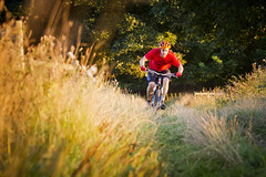 Golden Hour (Andrew Goldstraw) Tags: sunset sunlight mountain grass bike cycling warm track path mountainbike riding mtb delamere delamereforest