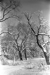 020869 18 (ndpa / s. lundeen, archivist) Tags: park trees winter blackandwhite bw snow storm 1969 film monochrome boston 35mm ma blackwhite massachusetts nick snowstorm 1960s february common snowfall blizzard bostoncommon beaconhill publicgarden winterstorm dewolf heavysnow bigsnow coveredinsnow recordsnowfall recordsnow nickdewolf photographbynickdewolf downedtreebranches