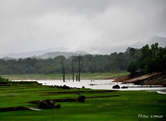 Tranquil (@mons.always) Tags: travel camp india nikon rainforest trips karnataka agumbe d90 18105mm