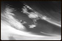Skier (Zelda Wynn) Tags: weather blackwhite skies scenic windy gale auckland artgalleryofnsw cloudscape troposphere inspiredbyalfredstieglitz zeldawynnphotography