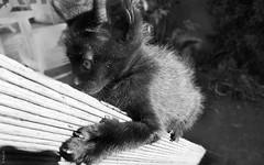 cat (*paz) Tags: blackwhite bn littlecat