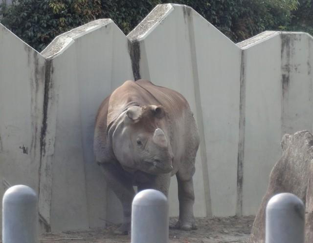 サイは以前のまま|名古屋市東山動植物園