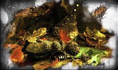 Homage - Hommage (Fab Aeb) Tags: autumn art artistic painting seasons homage leaves gear mud textured nature natural elements automne artistique painture saisons hommage feuilles pierre matriel boue texture naturel lments creative crative nikon d40x fabaeb