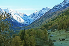 le Ltschental , Valais / Wallis  ........   mi ombre mi lumiere (luka116) Tags: nature berg montagne automne schweiz switzerland novembre suisse swiss svizzera paysage moutain wallis valais montagnes valle ltschental
