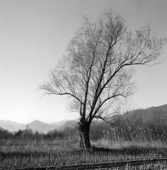 Alone (vigano' gianluca) Tags: film kodak cm hasselblad 500 tmax400 distagon